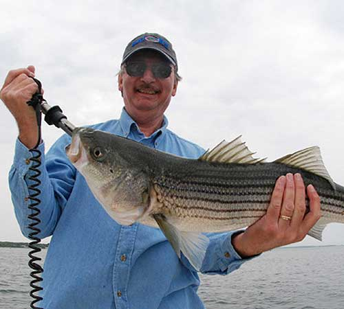 Barnstable Harbor Fly & Light Tackle Fishing Charters