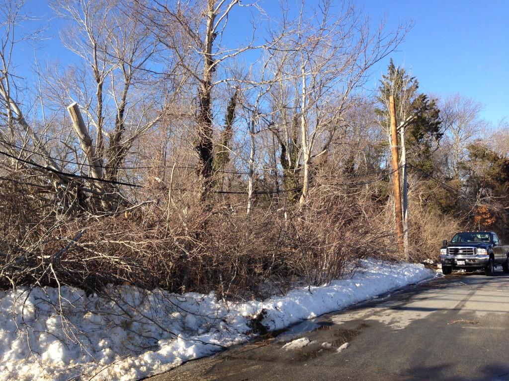 Blizzard 2013 Tree Damage