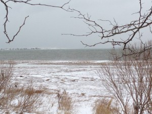 Sandy Neck Winter