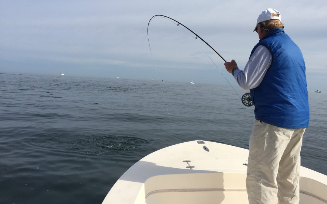 June is a great month for fishing Barnstable Harbor
